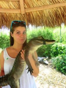 crocodile everglade