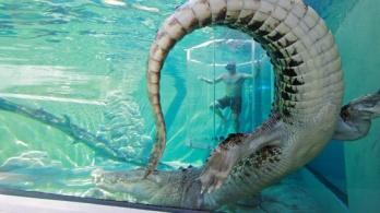 crocosaurus_cove_cage_of_death_denzel_dar_sur_r_product_540x304